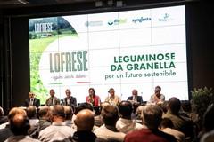 """""""Leguminose da granella per un futuro sostenibile: le buone pratiche dell'azienda Lofrese"""""""