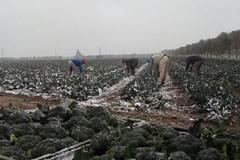 La Puglia nella morsa del gelo. Cresce la preoccupazione della Coldiretti