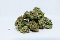 Cannabinoidi, si attende l'approvazione del Disegno di Legge