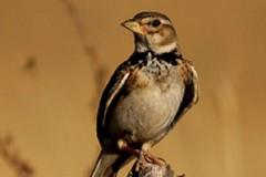 Atlante degli uccelli nidificati