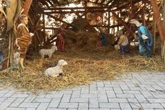 Presepe in Comune, benedizione del Bambino Gesù