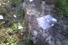 Funghi e rifiuti, il binomio contro l'ambiente