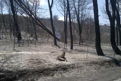 Bosco Difesa Grande: domato l'incendio