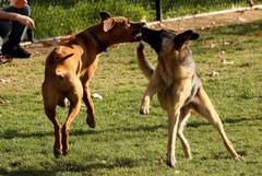 Puglia, approvata legge su randagismo e benessere degli animali