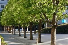 """Parte l'iniziativa """"Regala un albero alla tua città"""""""