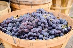 Festa dell'uva e del vino rinviata a domenica 17 ottobre