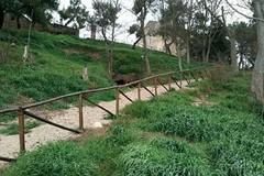 Poggiorsini: Passeggiata lungo il sentiero versante sud