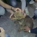 Salvato un piccolo cucciolo di cane a Gravina