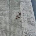 Deiezioni canine in via Loreto