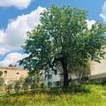 A Gravina arriva il festival della sostenibilità