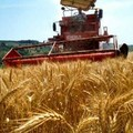 Imu agricola: Laboratorio Democratico chiede un consiglio monotematico