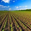 Sud e agricoltura: istituito tavolo tecnico in Senato