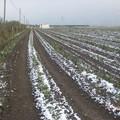Agricoltura, a Bari massiccia partecipazione dei gilet arancioni