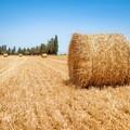 Nuovo contratto di lavoro per gli agricoltori