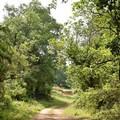 Una passeggiata tra i suoni del bosco Difesa grande