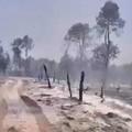 Bosco: torna alla ribalta il progetto antincendio con acque reflue