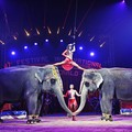 """Non più circo con animali a Gravina """