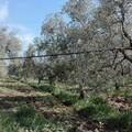 """Puglia martoriata dal maltempo, la Cia: """"Cambiare la 102"""""""