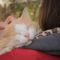 Giornata mondiale degli animali: l'impegno dell'Amministrazione Comunale