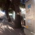 Albero in via Tripoli: le radici smuovono il marciapiede