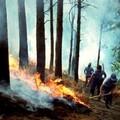 Maggiore pulizia per evitare nuovi incendi