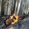 """Incendio di vaste dimensioni presso il bosco  """"Difesa Grande """""""