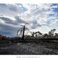 Quel che resta del bosco dopo l'incendio