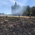 Domato un principio di incendio nella pineta comunale