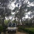 Alberi pericolanti in pineta, il Comune interviene