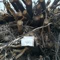 Resta sotto sequestro la legna del bosco