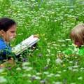 Fornitura libri di testo per l'anno scolastico 2010/2011