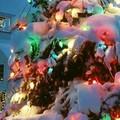 """Ma il comitato festa San Michele non doveva """"prendersi cura"""" anche del Natale?"""