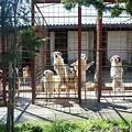 Direttamente dal canile rifugio di Altamura