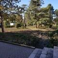 Attacco al verde pubblico, rubati i noci piantati della pineta comunale