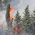 Il verde gravinese nuovamente in fiamme
