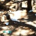 Chiusura del Parco Bimbi nella pineta comunale