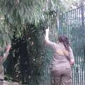 Le Guardie ambientali in servizio