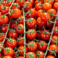 Made in italy: con obbligo etichetta 'pummarola' tutela origine
