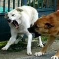 Due bambini aggrediti da cani randagi