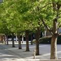"""Parte l'iniziativa  """"Regala un albero alla tua città """""""