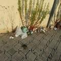 Ospedale della Murgia: no ai cani, si ai rifiuti