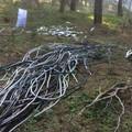 """Nella pulizia al bosco """"Pulicchie"""" spunta materiale sospetto"""