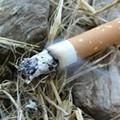 Stop a sigarette e fazzoletti per strada. Il Governo dichiara guerra agli sporcaccioni