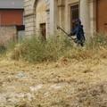 Manutenzione dell'erba nella zona della Caccia