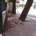Gli alberi in via Tripoli sono sani e stabili