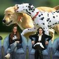 """Le volontarie della """"Lega del cane"""" replicano all'assessore Artal"""