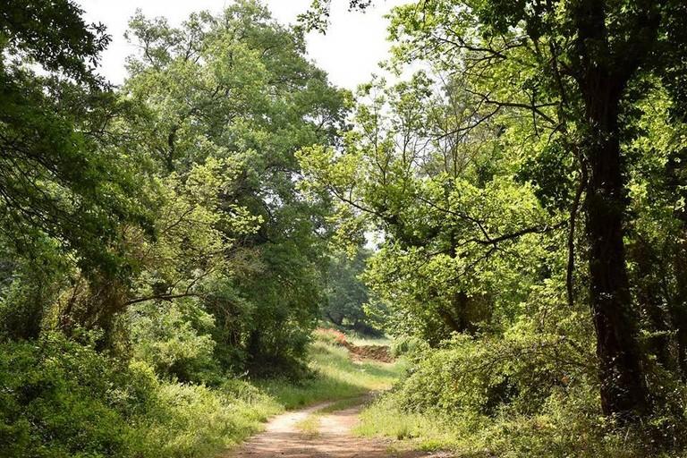 bosco comunale