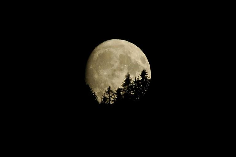 il bosco e la luna