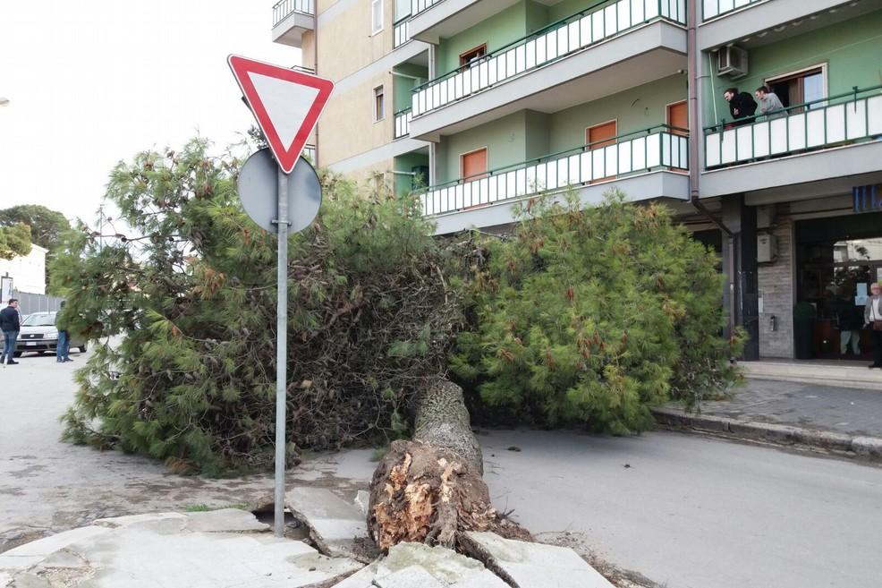 Albero cade in via Spinazzola