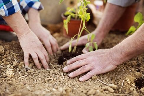 Agricoltura, diminuiscono le giovani imprese